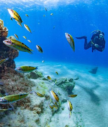 5* PADI Dive Centre Lanzarote | Manta Diving Lanzarote