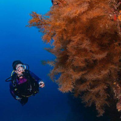 Curso de especialidad PADI en Lanzarote: Nitrox - con centro de buceo Manta Diving Lanzarote