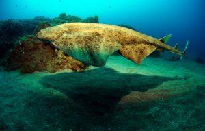 PADI Divemaster Puerto Del Carmen | Manta Diving Lanzarote