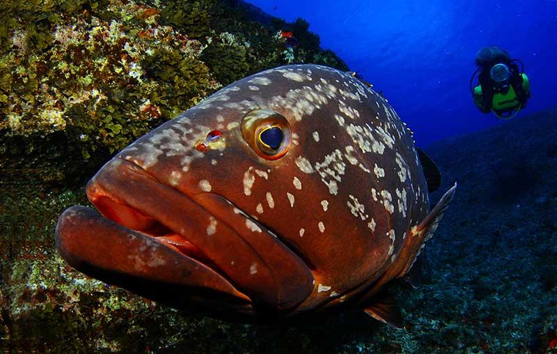 Marine Life in Lanzarote - Lanzarote Diving with Manta Diving Lanzarote