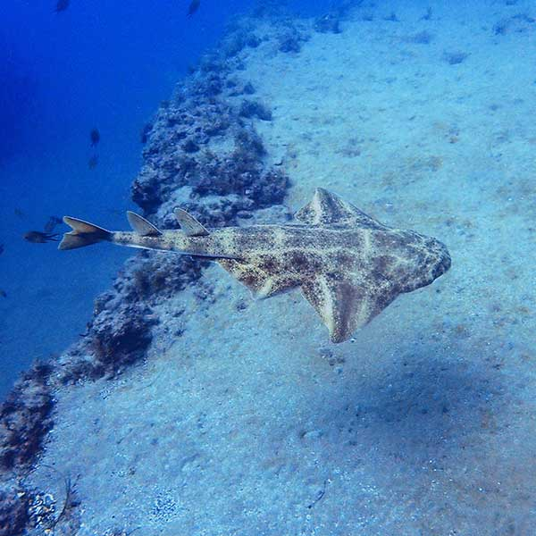 Dive Lanzarote | Photo Editing