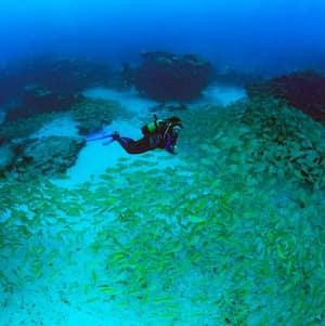 Buceo en Puerto Del Carmen Lanzarote Precios