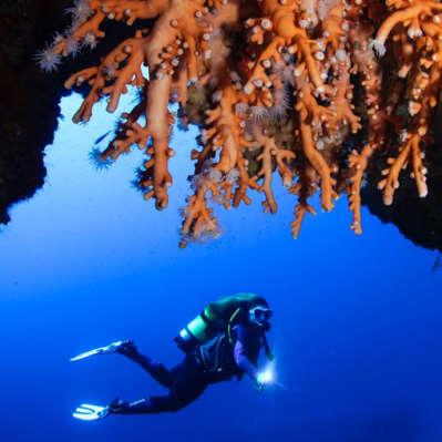 Coral naranja - curso de buceo PADI Advanced Lanzarote